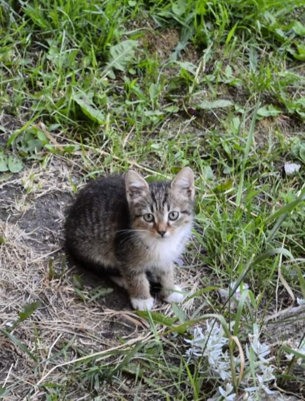 Вы готовы принять одного из маленьких котят в свои ладони? Вы не пожалеете!