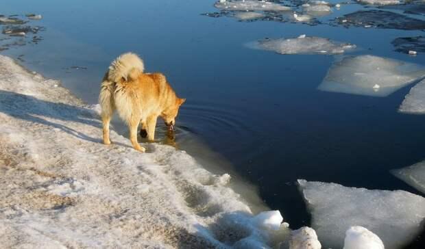 В Нижнем Тагиле школьница спасла из ледяной воды бездомную собаку