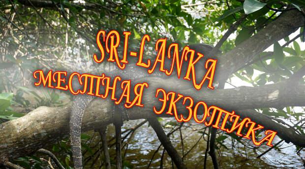 Srilanka. Прибрежная экзотика