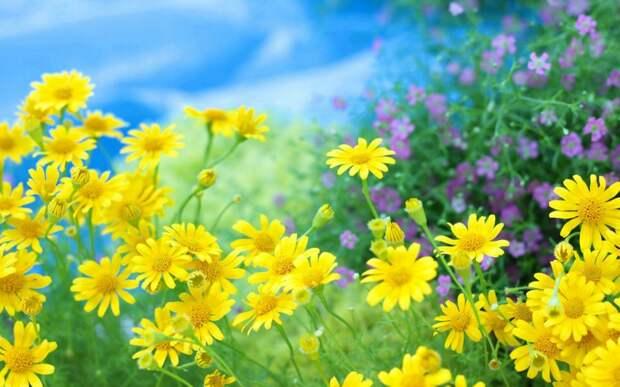 Я влюбилась в цветы луговые