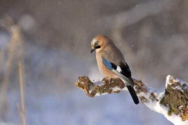 Небольшой снег будет идти в Удмуртии в четверг