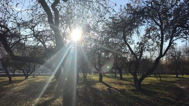 Прогулки под солнечным светом способны улучшить качество сна