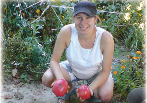 Совет читательницы: как собирать по два ведра помидоров с куста