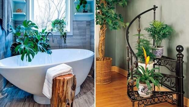 Растения как элемент декора: создаем из квартиры оазис уюта и спокойствия