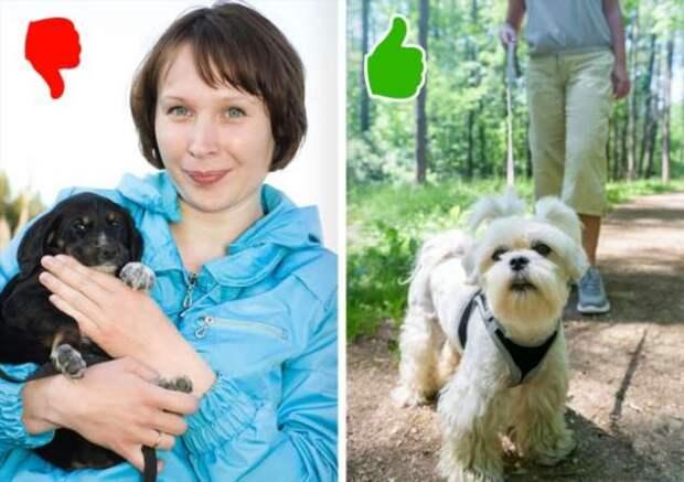 11 ошибок, которые пора перестать совершать каждому, кто любит свою собаку