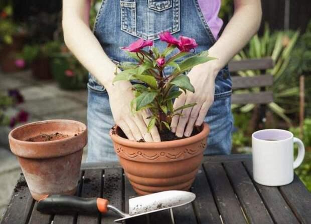 Далеко не всегда ее нужно делать. /Фото: gardenaddict.ru.