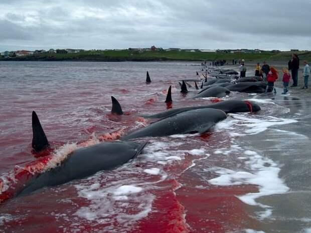 Нож китобоев