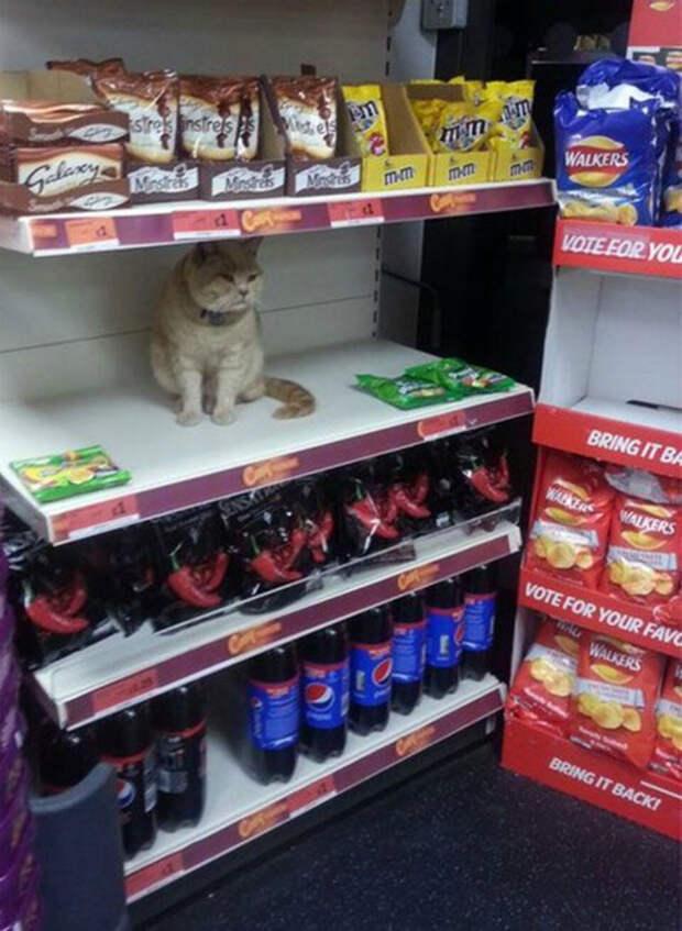 На полке только кот! | Фото: Тролльно.