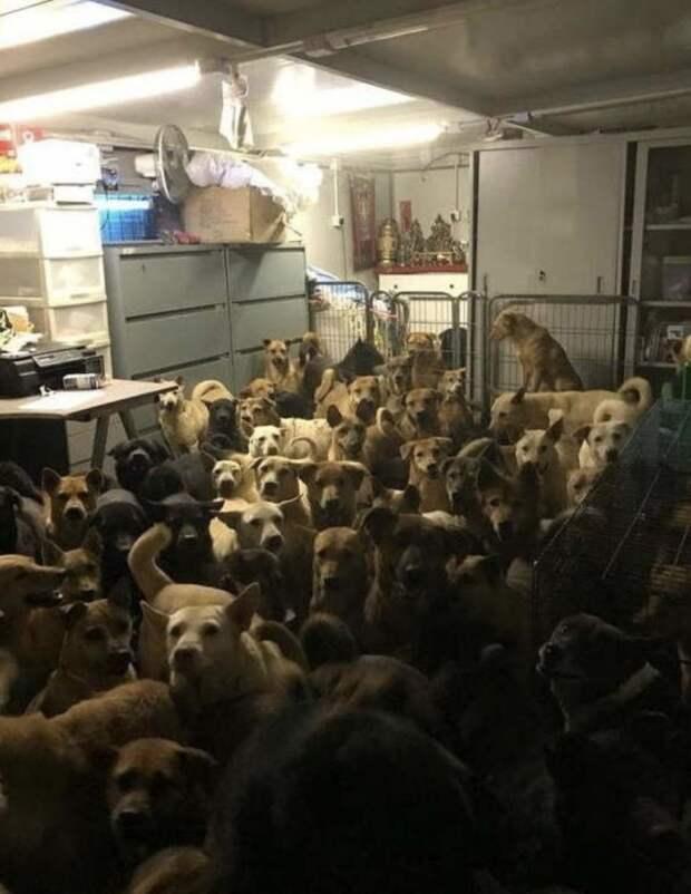 Этот мужчина из Гонконга спрятал собак от тайфуна. Теперь тайфун у него дома
