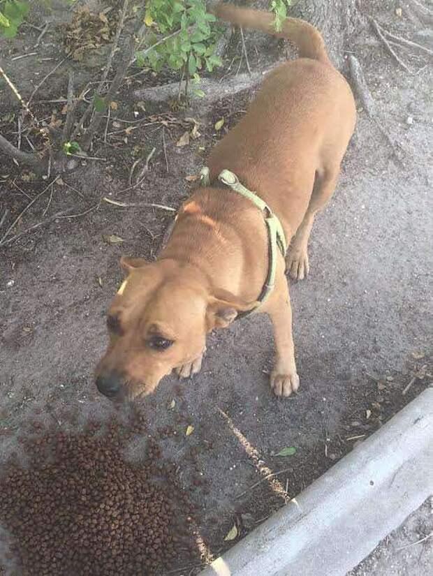 брошенная собака