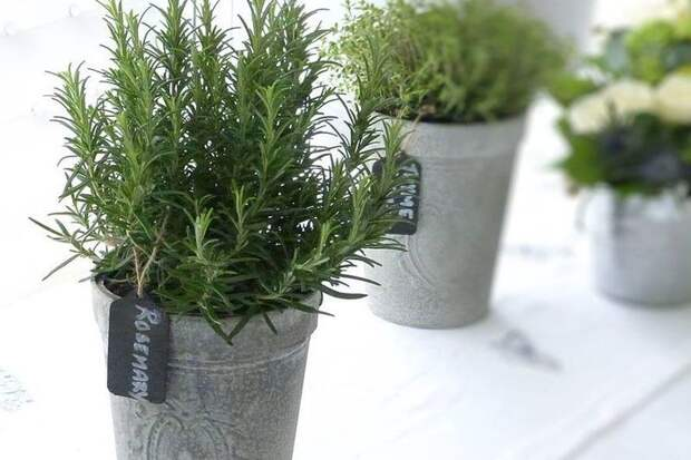 15 комнатных растений, которые принесут позитив и процветание в вашу жизнь