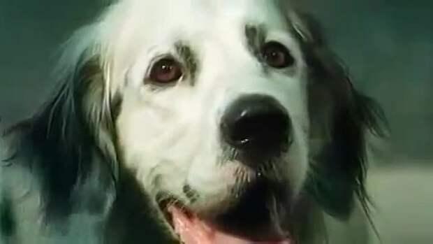 кадр из фильма «Белый Бим Черное ухо»