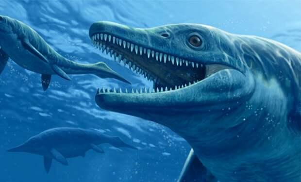 Ученые нашли следы подводного животного размером более 30 метров