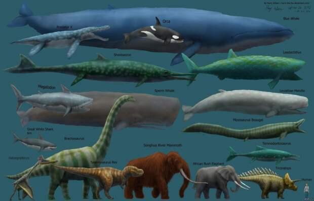 Самое большое современное животное