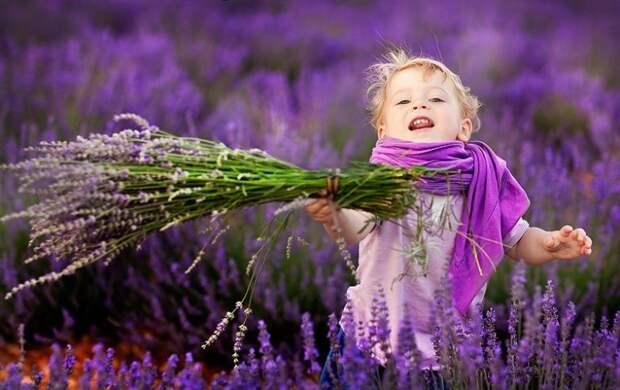 Хочется в травы, в травы... луга Прованса