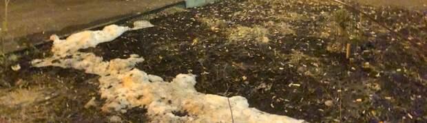 Газоны в Чукотском проезде очистили от мусора — управа