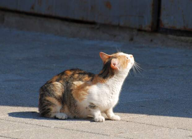 Российские регионы обязали снимать отлов бездомных животных на видео