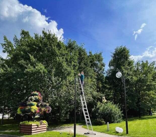 В парке «Березовая роща» обновили освещение