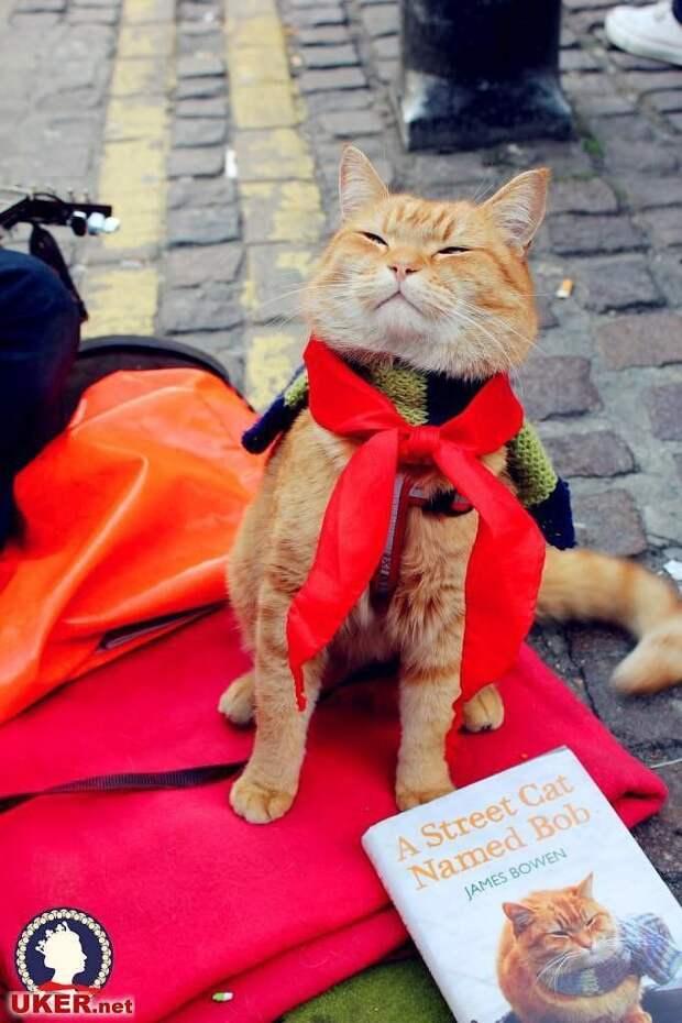 Рыжий кот Боб, который прославился на весь мир