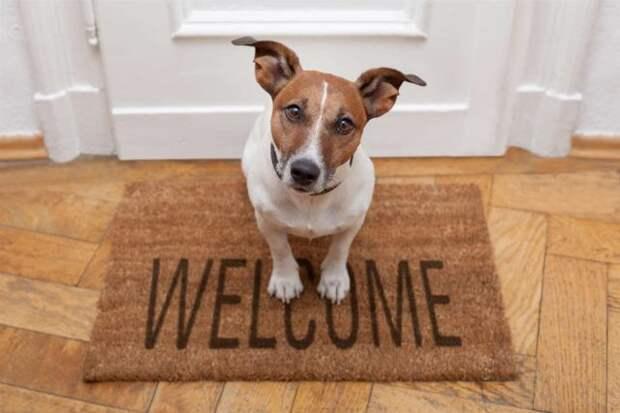собака сидит на коврике у двери