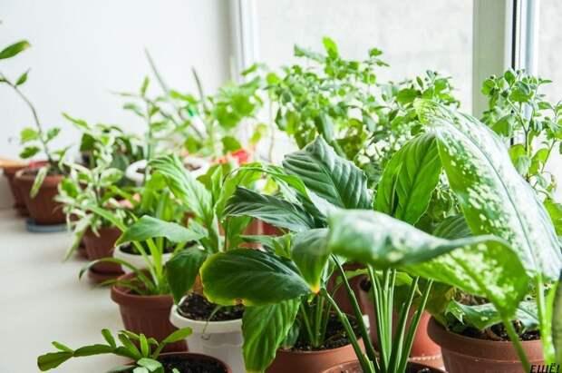 Уютный дом — это легко! Простые советы по уходу за комнатными растениями!