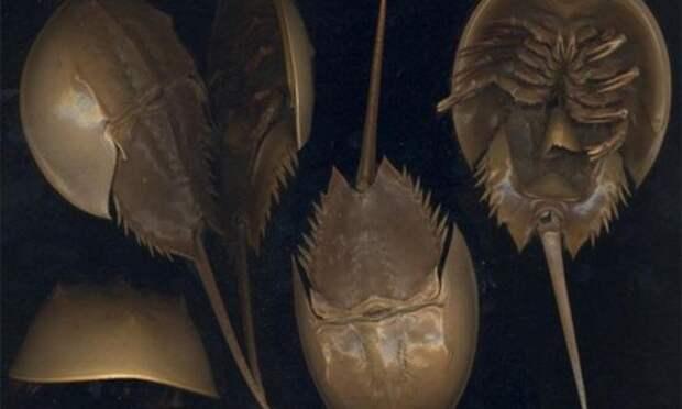 Загадки эволюции: Древние животные, которые не вымерли