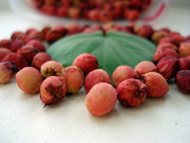 вишневые косточки