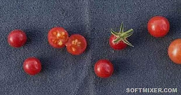 Генно-модифицированные овощи и фрукты