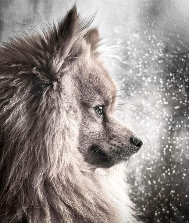 Третье место в категории «Портрет» великобритания, животные, интересное, конкурс, собака, собаки