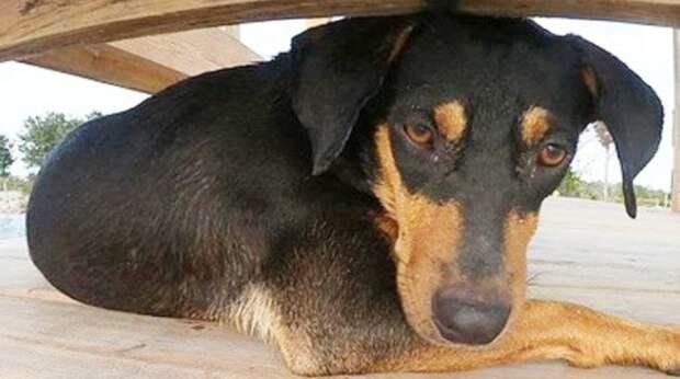 Собака бродила в одиночестве, но пара, отдыхавшая на острове, не смогла пройти мимо ее грустных глаз