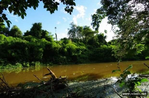 Красота Амазонских лесов. Часть вторая (36 фото)