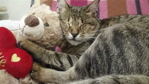 Женщина взяла из приюта трех слепых котиков, которые год ждали хозяина