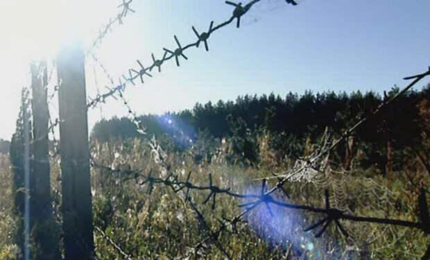 Джунгли Чернобыля: 20 лет без человека