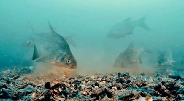 Лещ: Почему лещ = смачная оплеуха? Всё дело в поведении этой рыбы