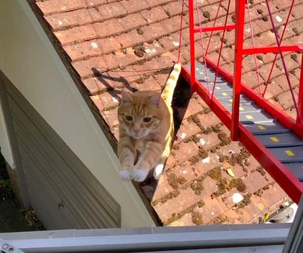 """Парень построил своему коту настоящий мост """"золотые ворота"""""""