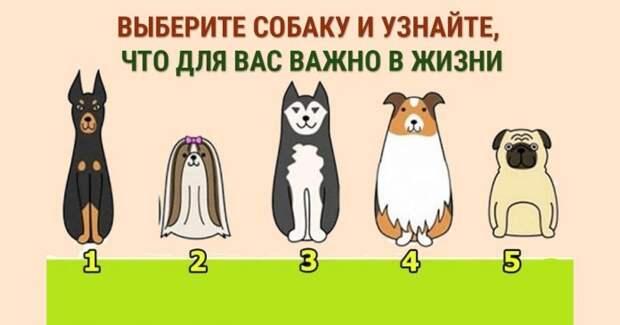 Выбери собаку и узнай свои жизненные ценности (тест)