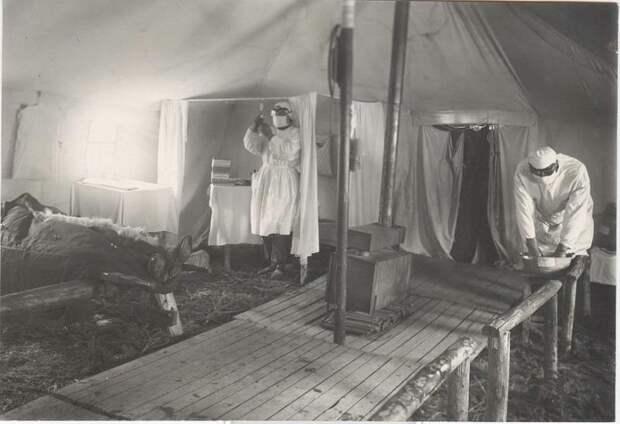 40 лет войны с комарами: как в СССР победили малярию