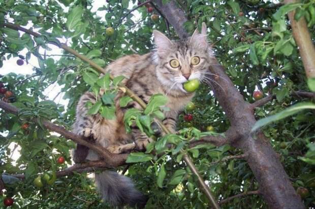 Есть отличное средство, которое поможет отогнать усатых-полосатых от своего огорода. /Фото: lh3.googleusercontent.com
