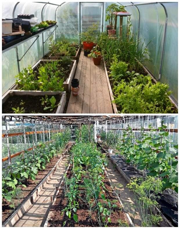 Смешанные растения в теплице должны располагаться в правильной направлении.
