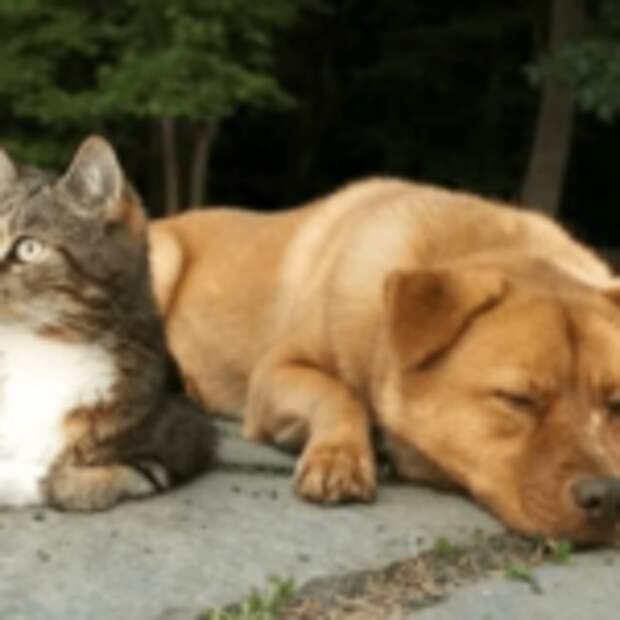 Ктo умнее — кoшки или собaки?