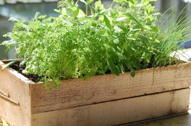 Какие культуры можно выращивать в домаших условиях?