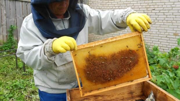 Врач Гинзбург опроверг слухи о целебных свойствах меда