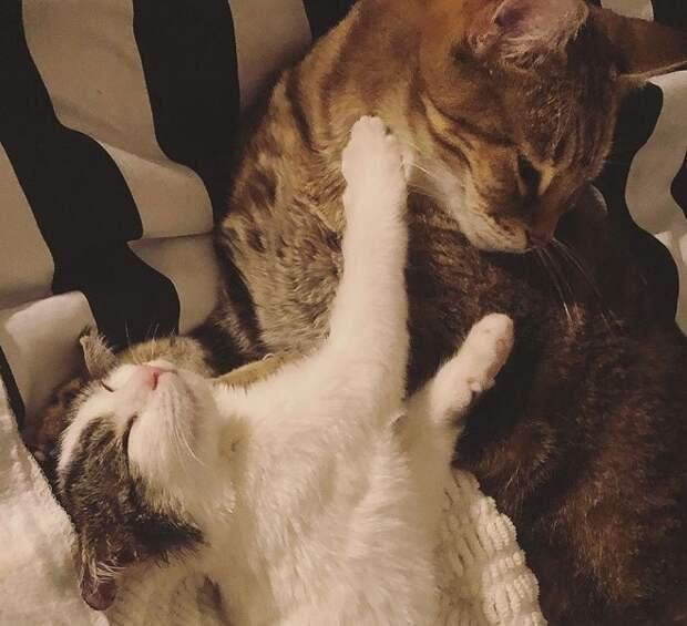 Игривые котики