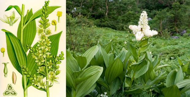 Будьте внимательны: Эти растения ядовиты!