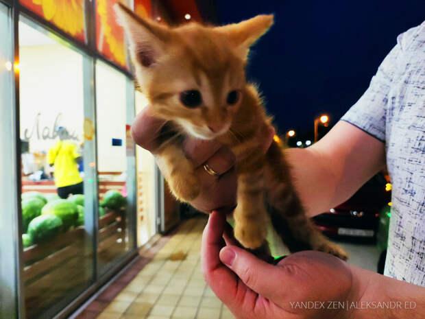 Подобрал около магазина котёнка который слезно кричал. Отвез его во двор где живет много кошек, а через два дня его уже приютили
