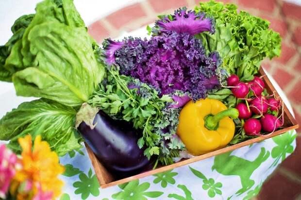 Овощи, Сад, Урожай, Органических, Садоводство