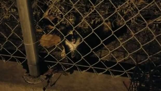 Мужчина, начав кормить бездомную кошку на работе, уже не смог ее бросить