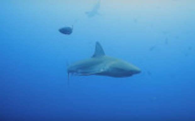 Израильтянам акулы – между ног: несмотря на запреты, народ повалил к морским хищникам с детьми. ВИДЕО