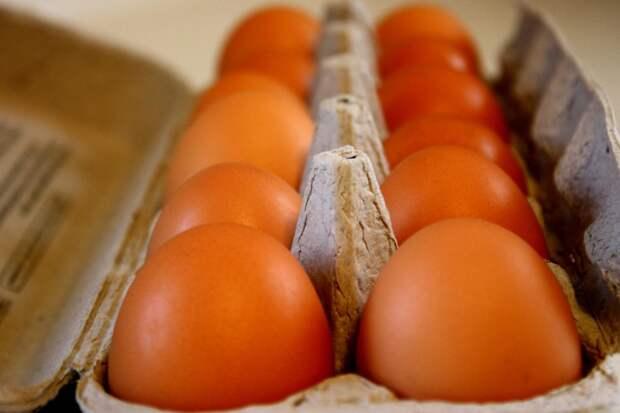 На Урале предложили облучать куриные яйца для дезинфекции