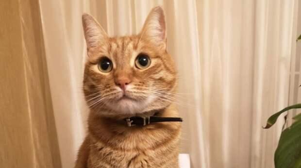 Посреди ночи девушка услышала мяуканье под дверью. Слабый уличный котёнок сам пришёл к ней домой